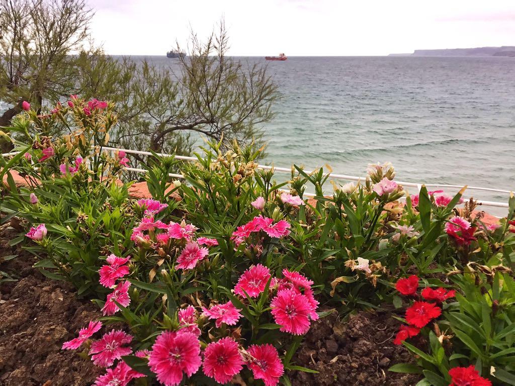 piquio-flores