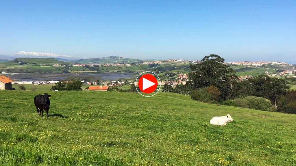 cantabria-vacas-video