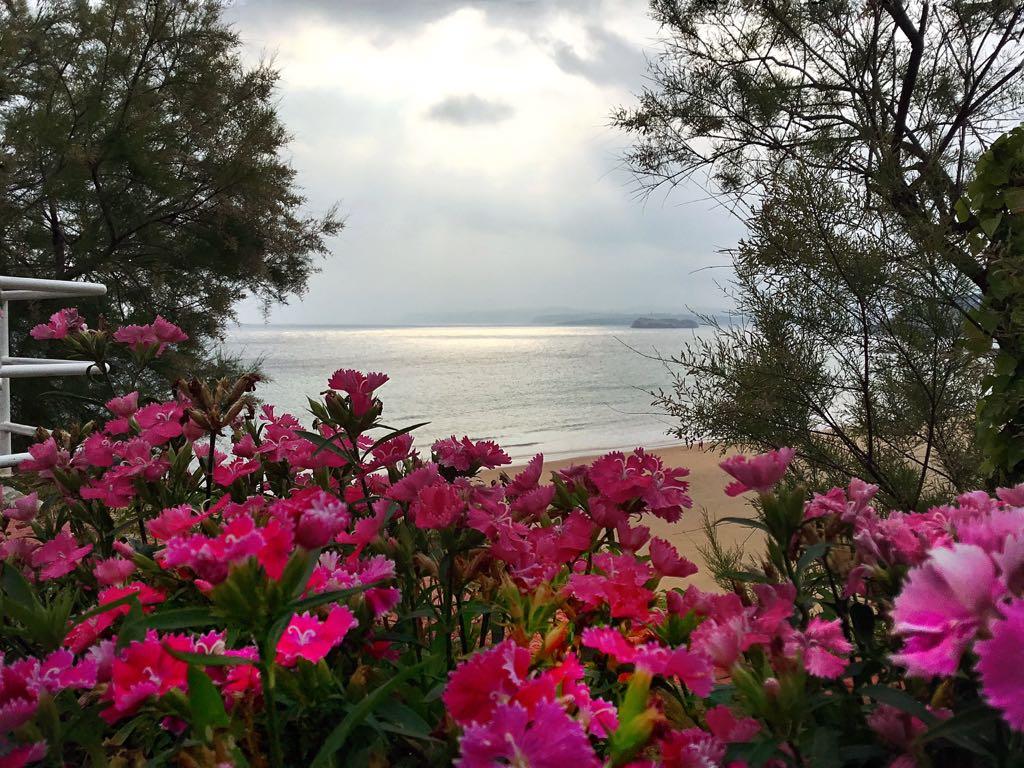 flores-mar-sardinero