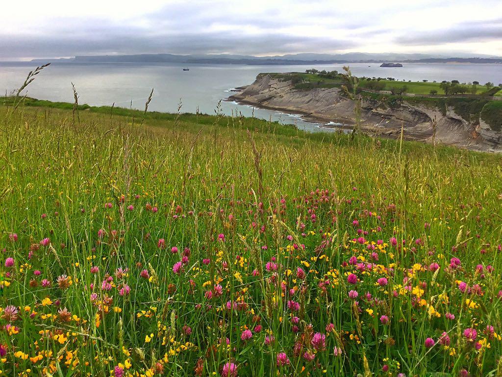 flores-salvajes-cantabrico