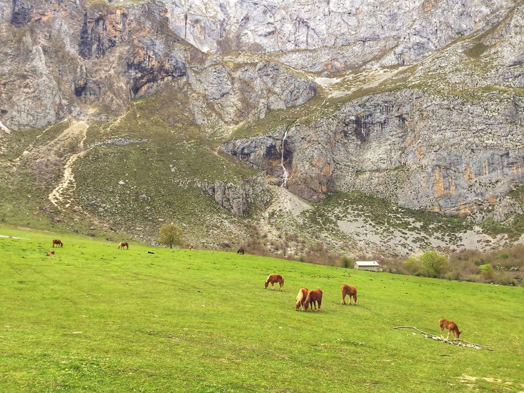 picos-europa-cantabria-caballos