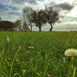 Pradera primaveral en Mataleñas