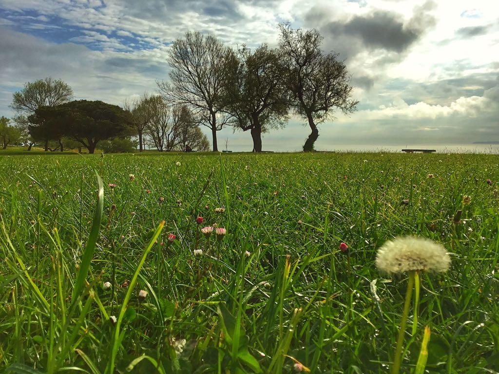 pradera-primaveral-matalenas