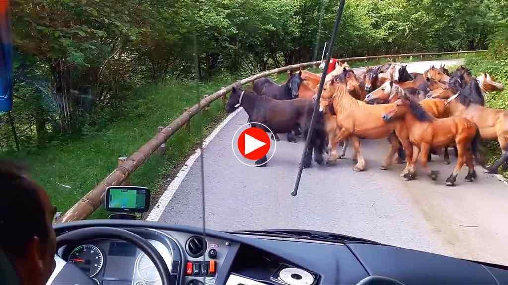 caballos-video