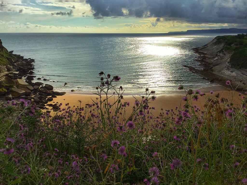flores-matalenas-santander