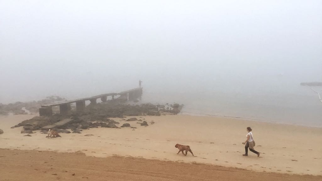 magdalena-niebla