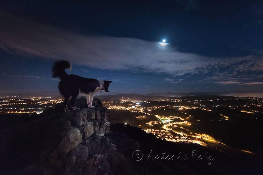 picota-perro-nocturna-antonio-ruiz
