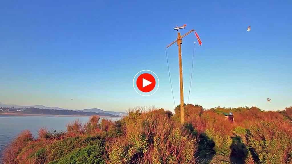 santa-marina-pajaros-video