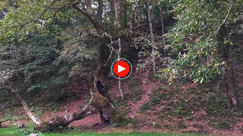ucieda-video