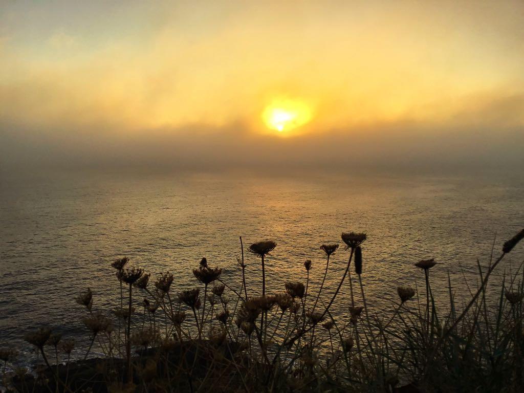 niebla-flores-santander