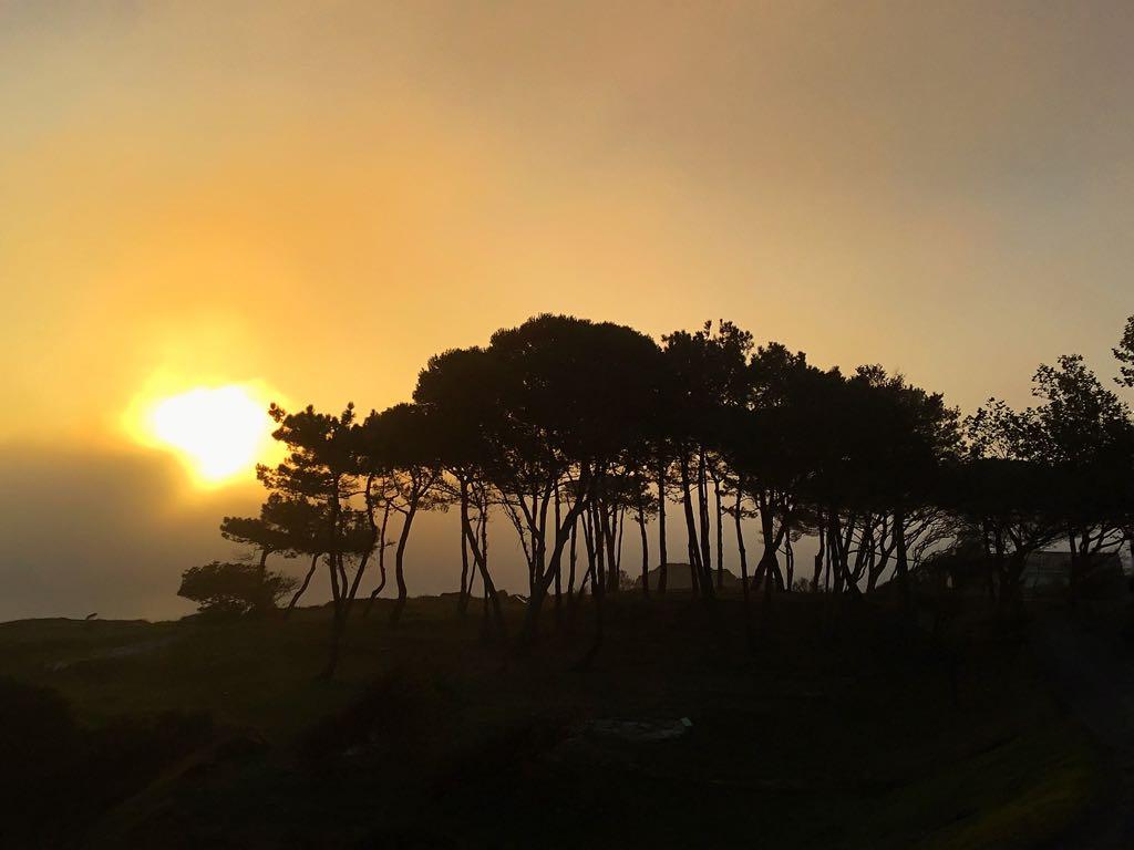 niebla-pinos-santander