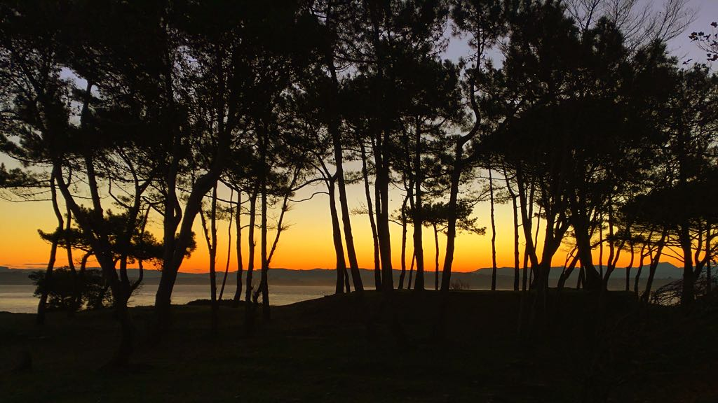 bosque-mar-amanecer