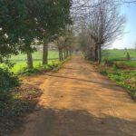 Un paseo por el nuevo parque de la Remonta