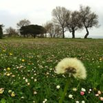 Sopla, que ya viene la primavera