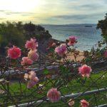 Flores en Molinucos