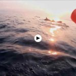 Salir en kayak y navegar junto a delfines en Usgo