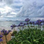 De flores y nubarrones