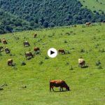 Los sonidos de la reserva del Saja