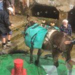 Hoy los Reginas han llevado un burro a bordo