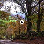 Pisadas de otoño en Las Coteras, Alto Besaya