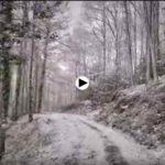 El bosque se pinta de blanco lentamente en el sur de Cantabria