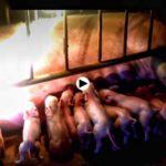 Diez recién nacidos en Selaya