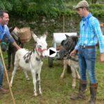 Así son las ferias de ganado de Cantabria