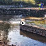 Abriendo camino a los salmones en la presa de Rubalcaba