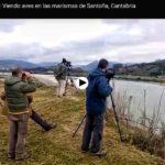 Pajareo santoñero: Viendo aves en las marismas de Santoña