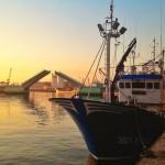 A puerto con el barco lleno de sardas