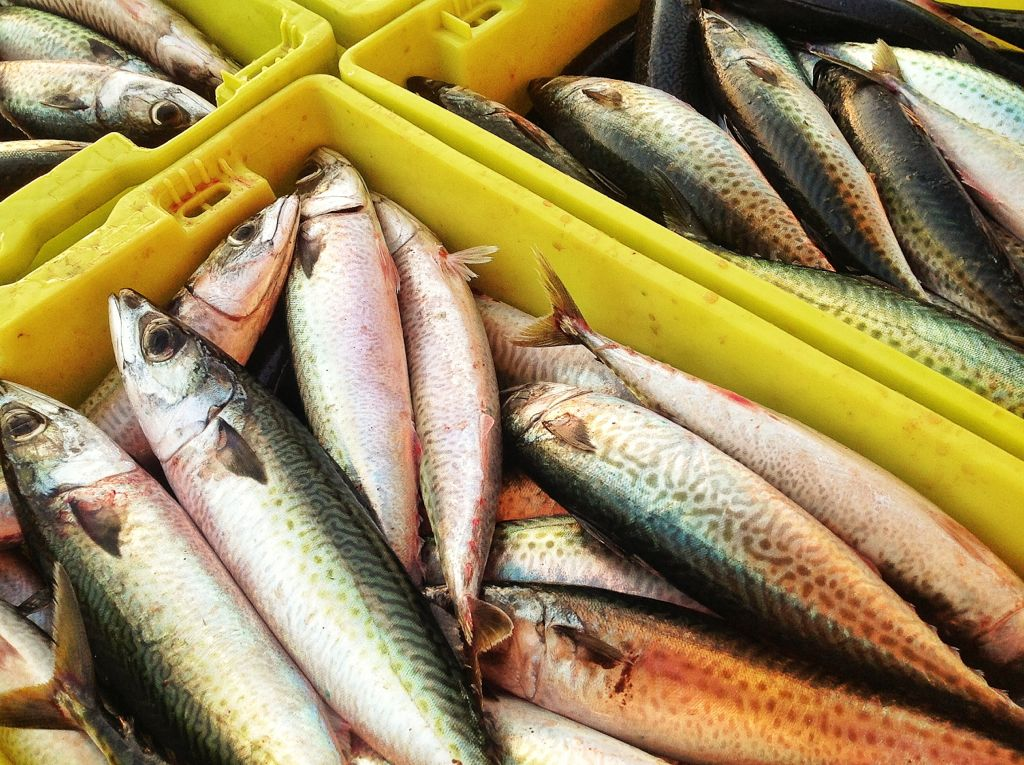 barrio-pesquero-santander-pesca-chicharro