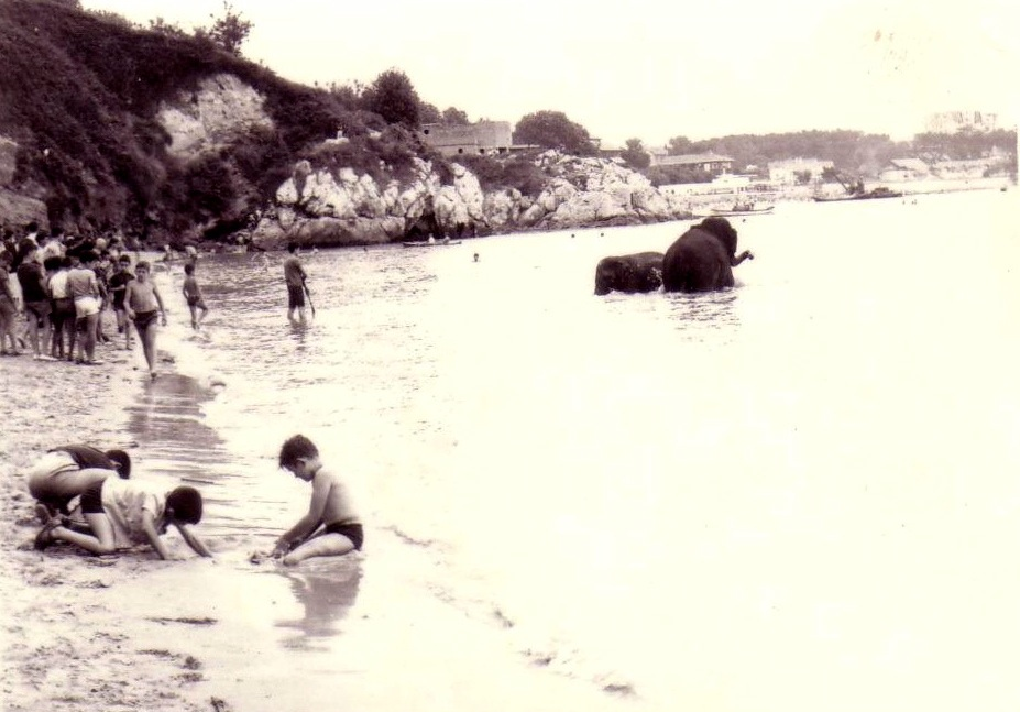 elefantes-en-la-playa-de-los-peligros-santander
