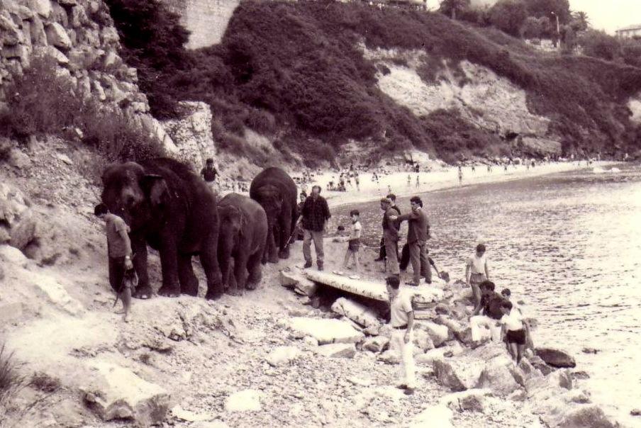 elefantes-playa-los-peligros-santander
