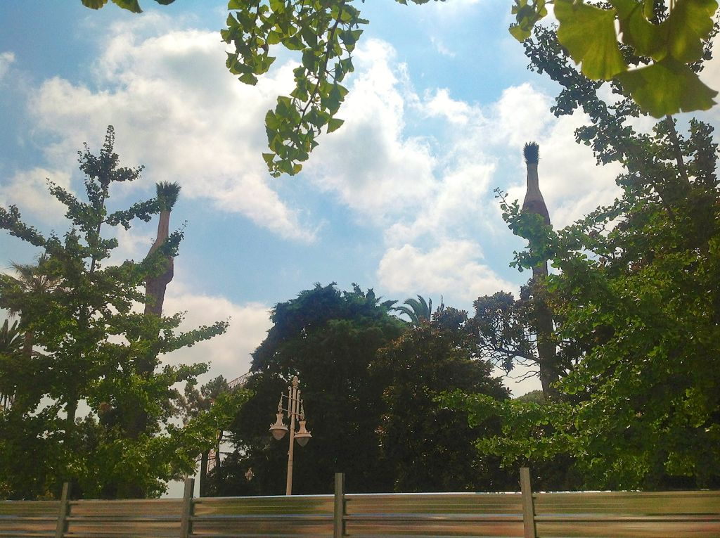 palmeras-jardines-de-pereda-centro-botin-mudanza