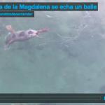 La foca de la Magdalena se echa un baile