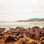 Rocas que parecen esponjas en la ría de Mogro