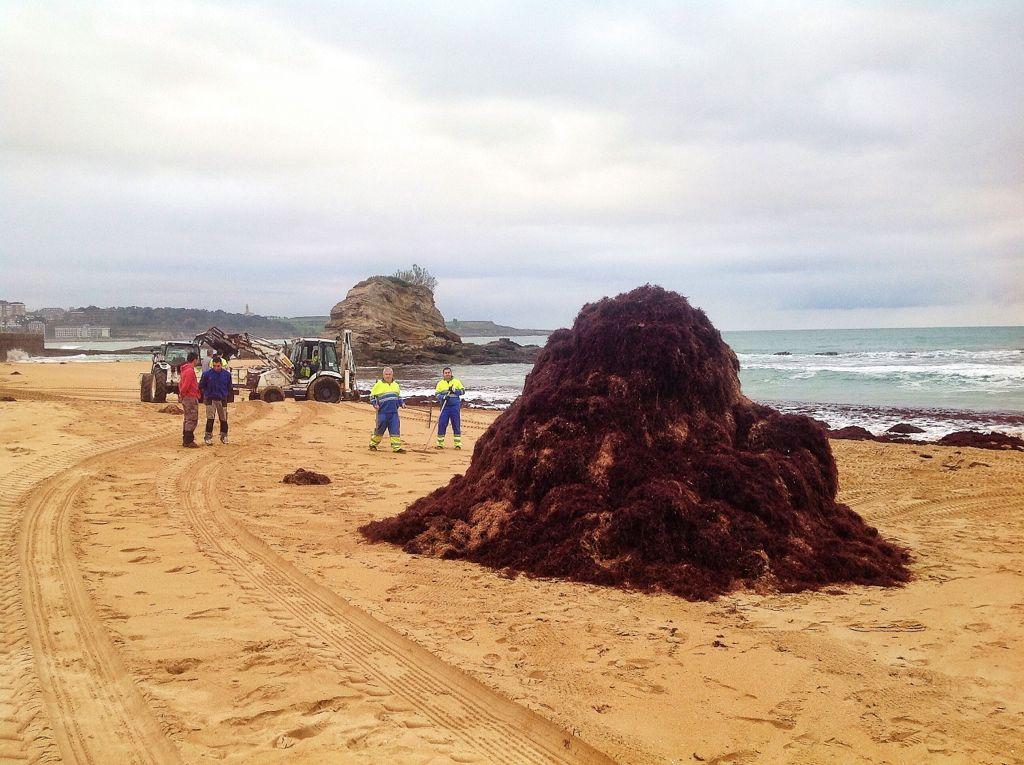 playa-del-camello-caloca-monton
