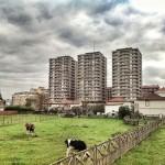 El edificio más alto de Cantabria está entre vacas