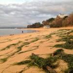 Césped en la playa de la Magdalena