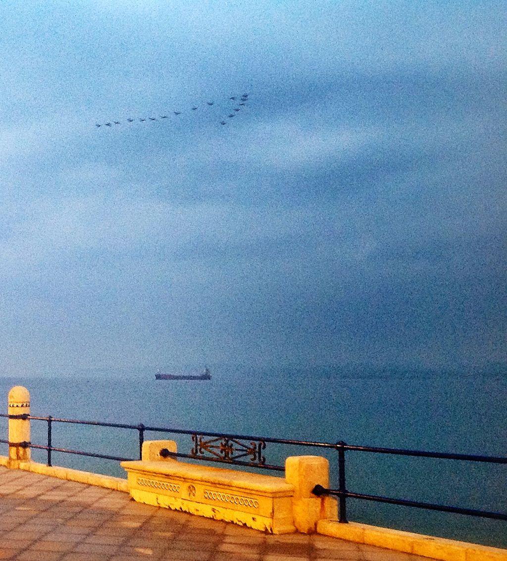 patos-sardinero-flecha