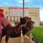 Camellos y carrozas ya están a punto para recibir a los Reyes en Santander