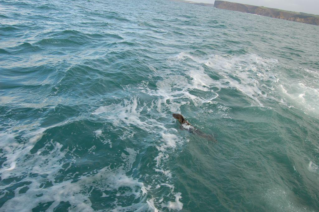 foca-embarcadero-muelle-calderon-vuelta-mar