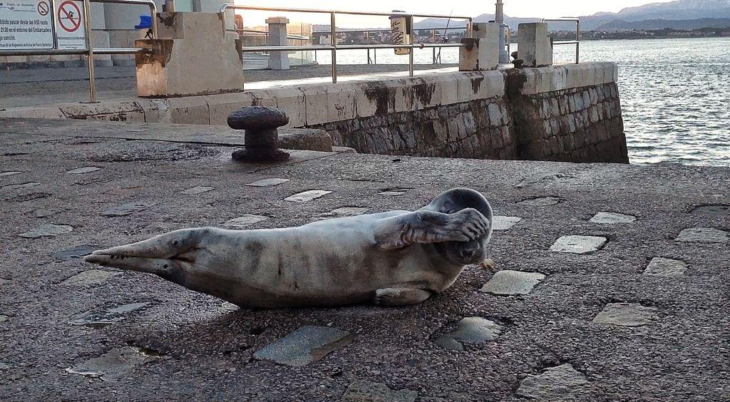 foca-muelle-calderon-santander-embarcadero