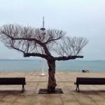 El árbol equilibrista