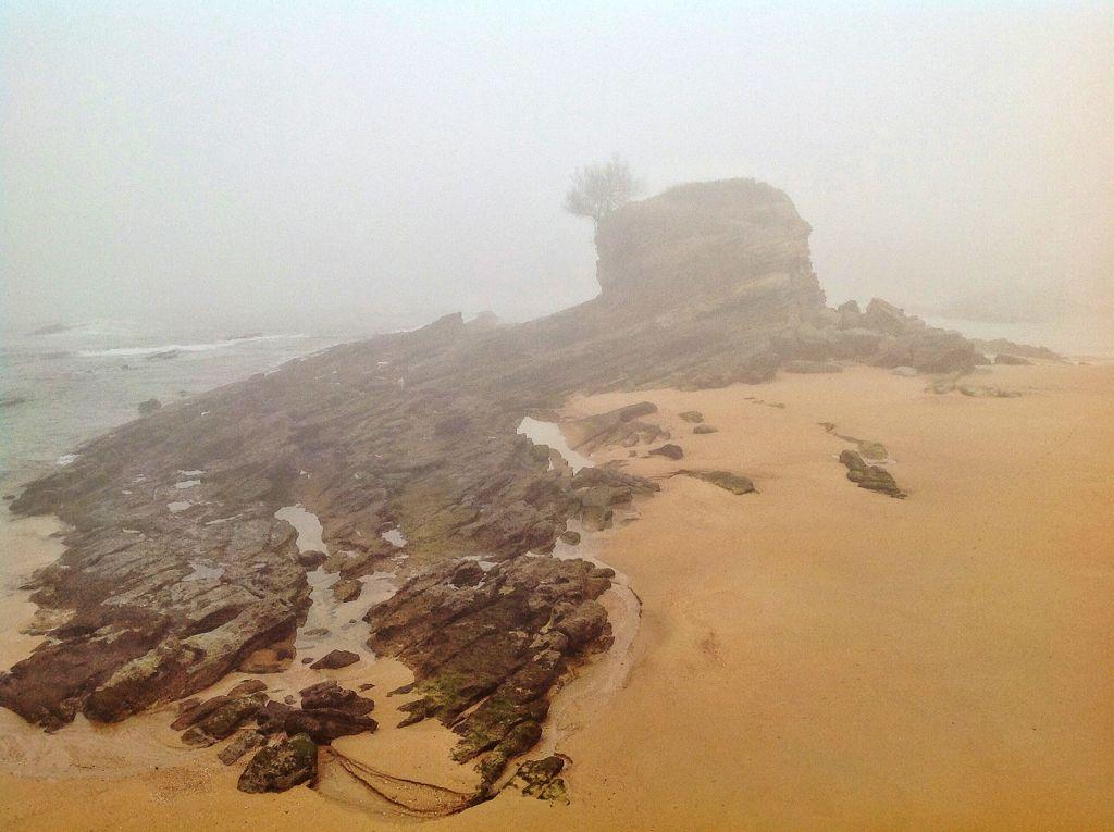 camello-niebla