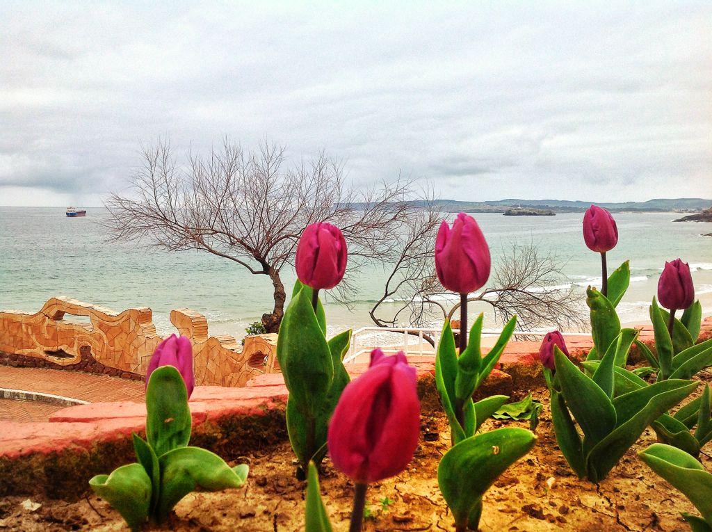 tulipanes-piquio-vistas-mar