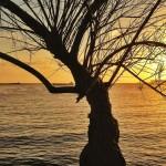 El árbol que mece al barco