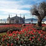 La invasión de los tulipanes rojos