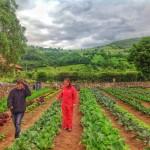 En los Valles Pasiegos vuelven a cultivar la tierra