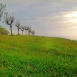 Las praderas de Mataleñas respiran primavera